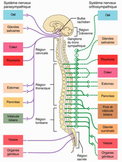 Qu'est-ce que l'ostéopathie ?